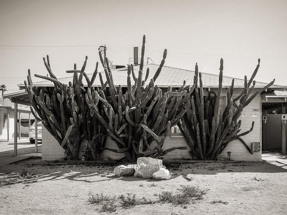 Cactus like this home.