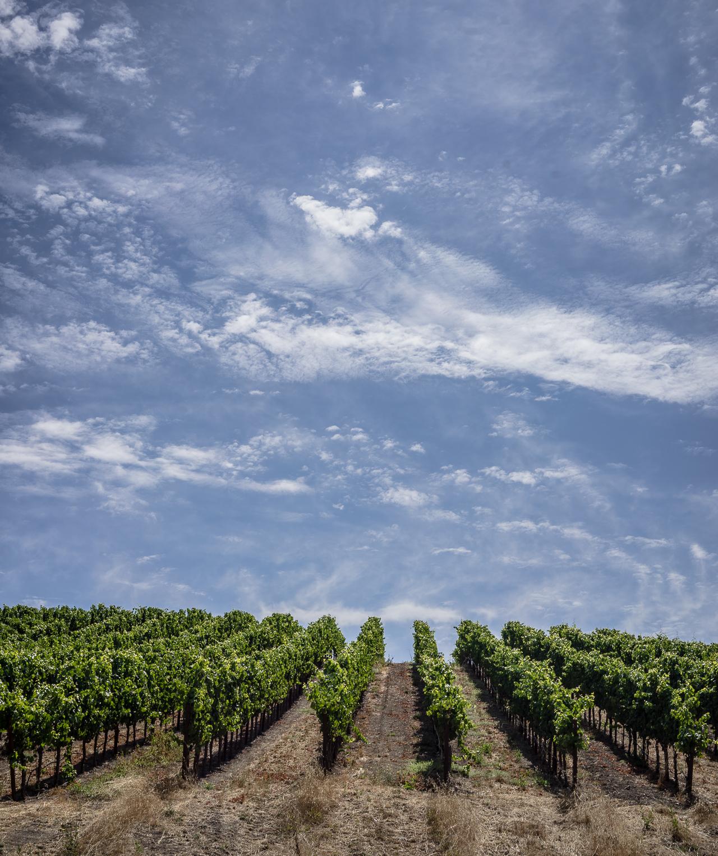 Copain Winery-5