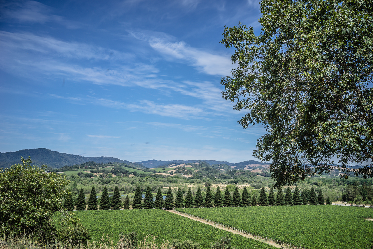 Copain Winery-8