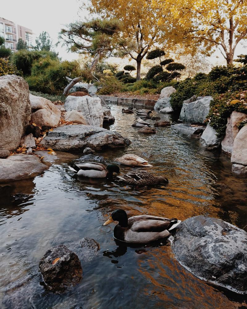 japanese friendship garden-3
