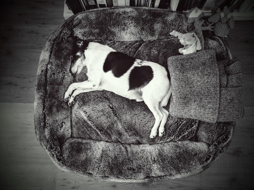 Rupik in his bed / Google Nexus 2015